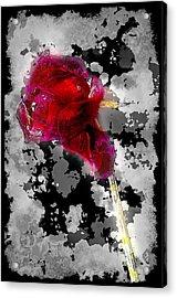 Rose Acrylic Print by Mauro Celotti