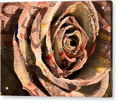Rose Money Acrylic Print