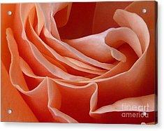 Rose Of Heart Acrylic Print by Bernard MICHEL
