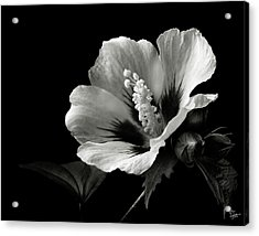Rose Of Sharon In Black And White Acrylic Print by Endre Balogh