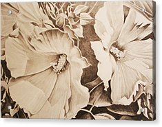 Rose Of Sharon Acrylic Print by Yvonne Scott