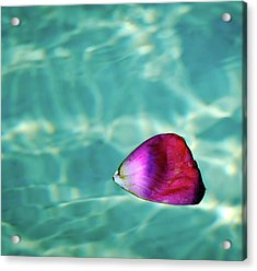 Rose Petal Floating On Water Acrylic Print by Gerard Plauche