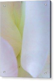 Rose Petals I Acrylic Print