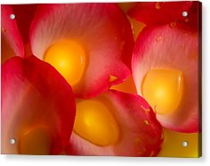 Rose Pod Acrylic Print by Bobby Villapando