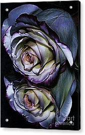 Rose Reflection 2 Acrylic Print by Marianne Troia