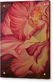 Rose Two Acrylic Print by Teresa Beyer