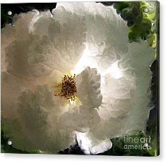 Rose Vaporeuse Acrylic Print