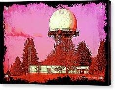 Rosebuzz Acrylic Print