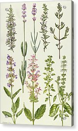 Rosemary And Other Herbs Acrylic Print by Elizabeth Rice