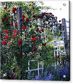 Roses & Lilacs Acrylic Print