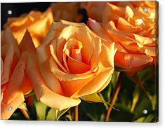 Roses For Me Acrylic Print
