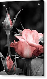Acrylic Print featuring the photograph Roses In Pink And Gray by Michelle Joseph-Long