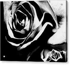 Roses Study 1 Acrylic Print by Lisa  Spencer