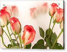 Roses Acrylic Print by Tom Gowanlock