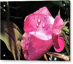 Rosy Morning Acrylic Print