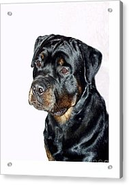 Rottweiler 1539 Acrylic Print by Larry Matthews
