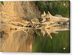 Rouge River Reflections One Acrylic Print by Alan Rutherford