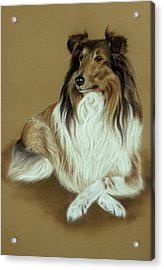 Rough Collie Acrylic Print by Patricia Ivy