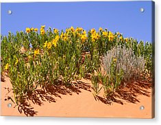 Rough Mule Ears Acrylic Print