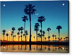 Row Of Palm Trees Acrylic Print by Lee Sie Photography