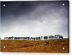 Row Of Trees In A Field, Yorkshire Acrylic Print by John Short