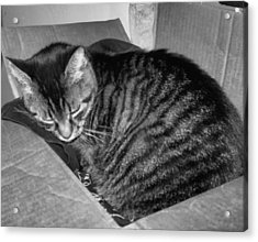 Rox In A Box Acrylic Print by Juliana  Blessington