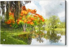 Royal Poinciana Lake Acrylic Print by Francesa Miller