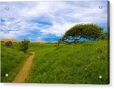 Rubjerg Path Acrylic Print