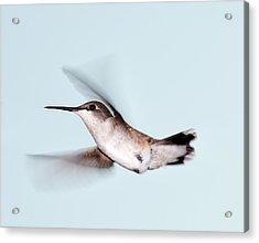 Ruby-throated Hummingbird In Flight Acrylic Print by Jim McKinley