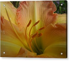 Ruffled Lily II Acrylic Print by Peg Toliver