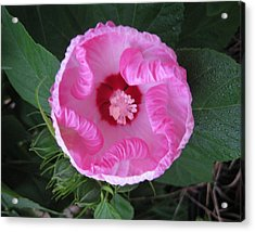 Acrylic Print featuring the photograph Ruffles by Judy Via-Wolff