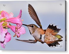 Acrylic Print featuring the photograph Rufous And Flowers by Jack Moskovita