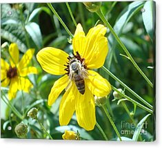 Rumble With A Bee Acrylic Print by Tina McKay-Brown