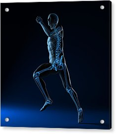 Running Skeleton, Artwork Acrylic Print by Sciepro