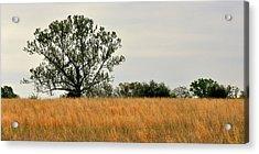Rural Landscape Acrylic Print by Marty Koch