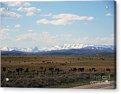 Rural Wyoming - On The Way To Jackson Hole Acrylic Print by Susanne Van Hulst