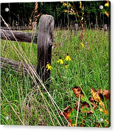 Rustic Road Charm Acrylic Print by Marilyn Smith