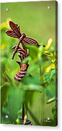 Rusty Dragonfly Acrylic Print by Christopher Holmes
