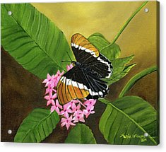 Rusty-tipped Butterfly  Acrylic Print by Maria Williams