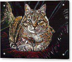 Ruthie The Cat Acrylic Print by Robert Goudreau