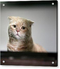 Sad Cat Acrylic Print by LeoCH Studio