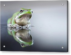 Sad Green Frog Acrylic Print by Darren Iz Photography
