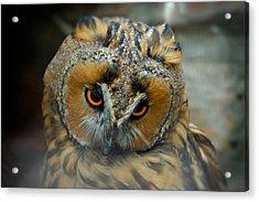 Sad Owl Acrylic Print