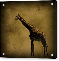 Safari Moon Acrylic Print