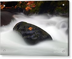 Safe Haven Acrylic Print by Mike  Dawson