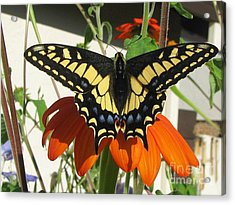 Acrylic Print featuring the photograph Safe by Tina Marie