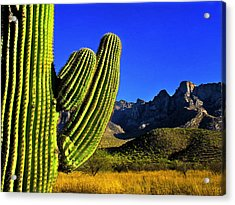 Acrylic Print featuring the photograph Saguaro And Catalina Mountains by Jim Moore