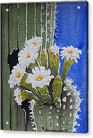 Saguaro Bloom Acrylic Print by Regina Ammerman