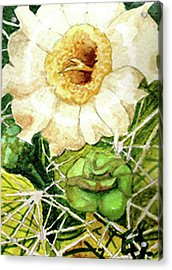 Saguaro Glory Acrylic Print