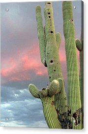Saguaro In The Sky Acrylic Print by Wendi Matson